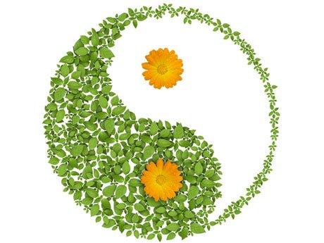 Entre trapos y ollas el orden en la casa seg n el feng shui for Plantas para tener en casa segun el feng shui