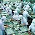 Tuyển Nữ Nam Chế biến thực phẩm xuất khẩu lao động Nhật Bản
