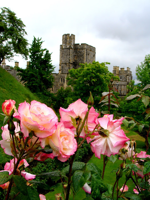 blooming roses photograph on English royal property