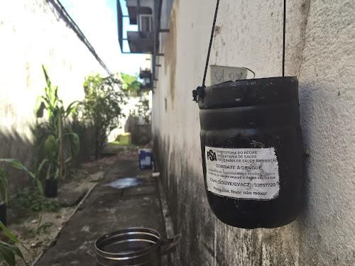 Armadilhas para mosquito da dengue