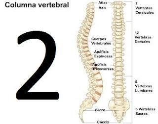 Médula espinal y la columna vertebral Parte 2