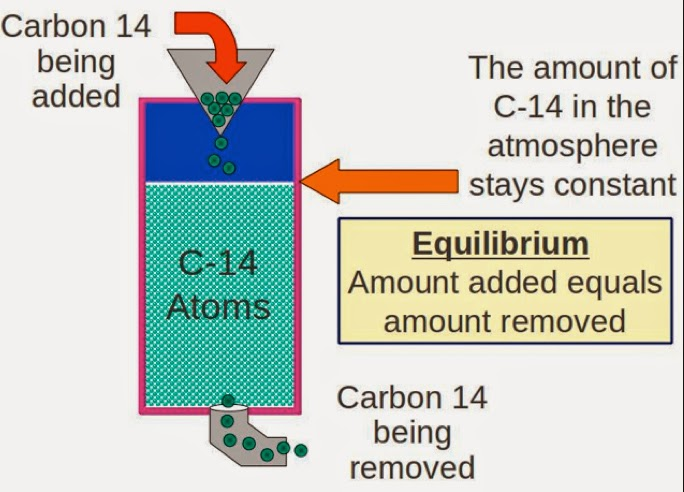 radiocarbon dating false Chapter 10nuclear chemistry section 102 rates of nuclear decay (pages 298–301) is the following sentence true or false radiocarbon dating is.