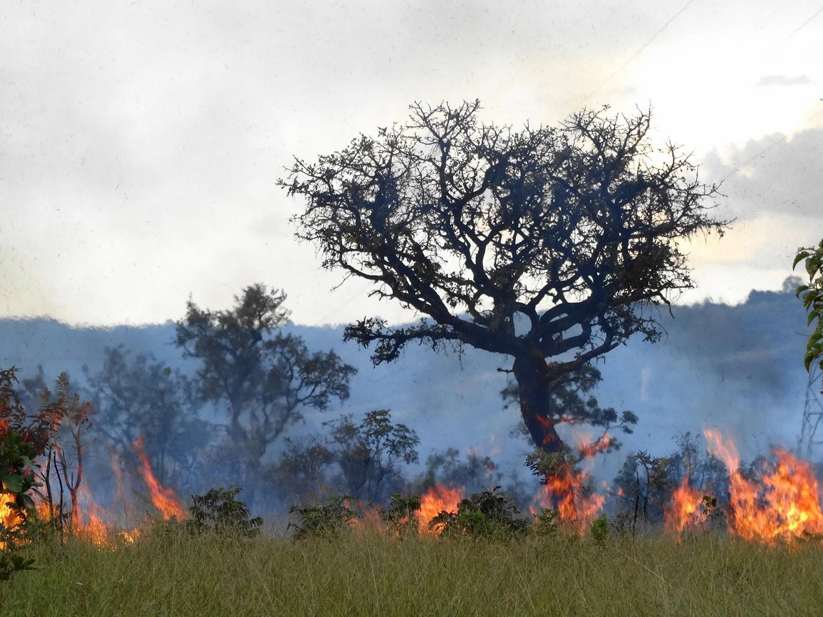 Fogo no Cerrado em Samambaia - Distrito Federal