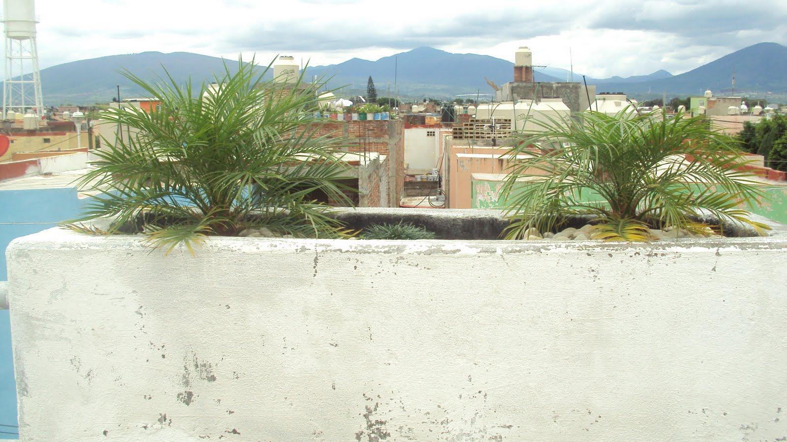 Maceto huerto urbano en azotea for Huerto en azotea