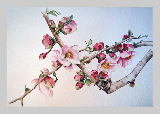 Adieu vilains kilos cou cou cou cou - Branche de cerisier japonais ...