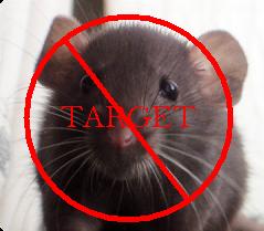 Bahaya dan Obat Penyakit Kencing Tikus