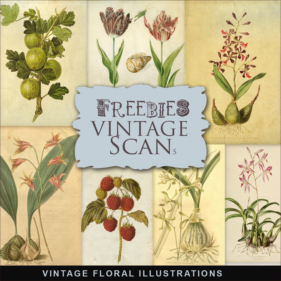 New Freebies Kit Of Vintage Floral Illustrations:Far Far