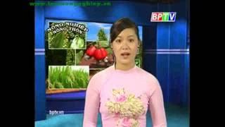 Kỹ thuật cây trồng
