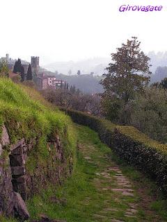 Sorana Toscana