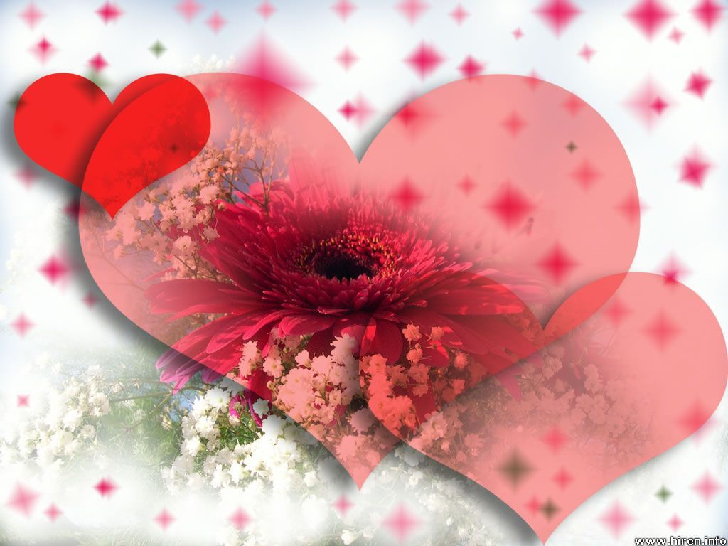 Love Flower Wallpaper Images : cat Love: red flower wallpaper