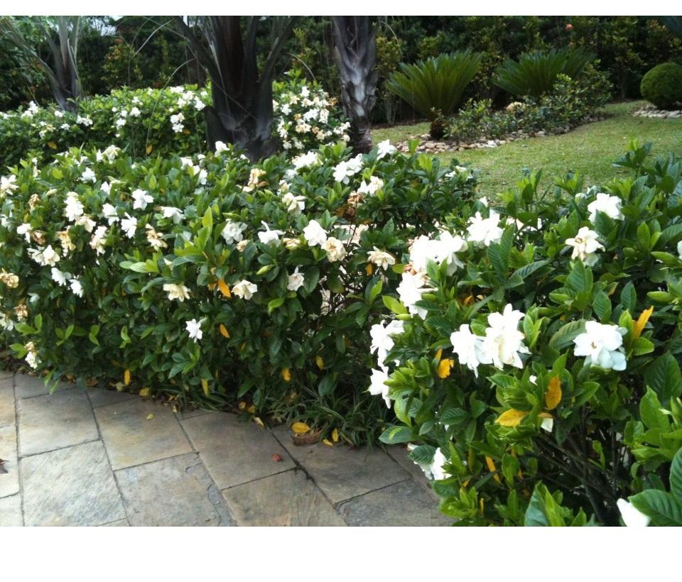cerca para jardim branca : cerca para jardim branca:sábado, 5 de janeiro de 2013