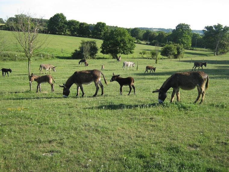 vue du troupeau
