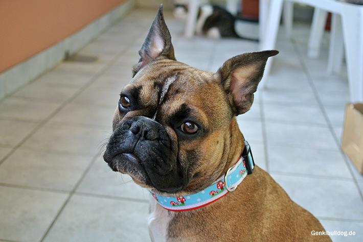 Hundehalsband Nähanleitung