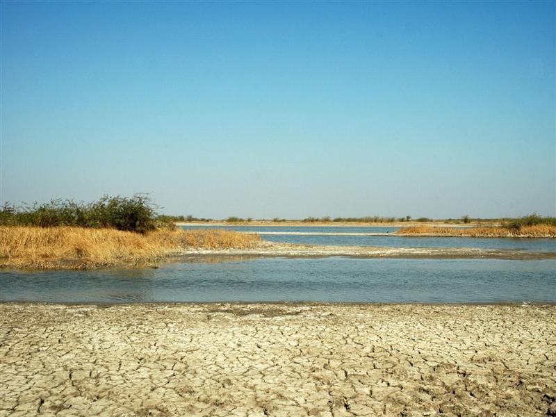 Salt Marsh - Kutch
