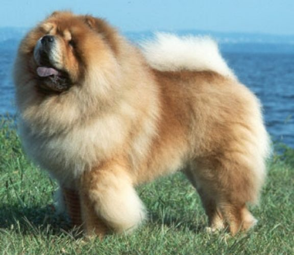 2013 Most Aggressive Dog | Dog Breeds Picture