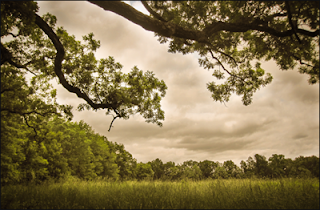 """""""Vintage Meadow,"""" by Michelle Hacker, Belcamp, MD. Copyright ©2013 Great Swamp Watershed Association."""