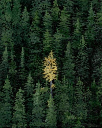 daily painters of colorado golden glory aspen and pine tree
