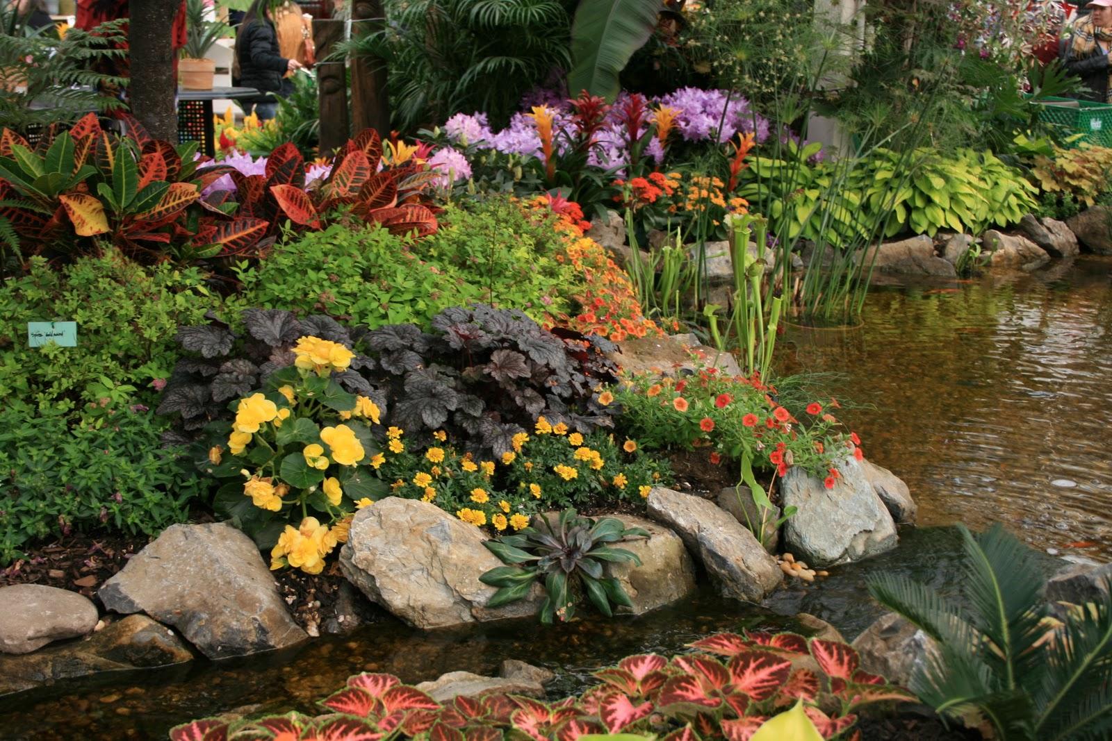 Careless gardener for Koi pond shade ideas