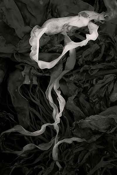 © Alan Henriksen