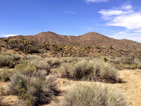 View northwest from Black Rock Canyon Trail toward summits 4789' and 4842', Joshua Tree National Park