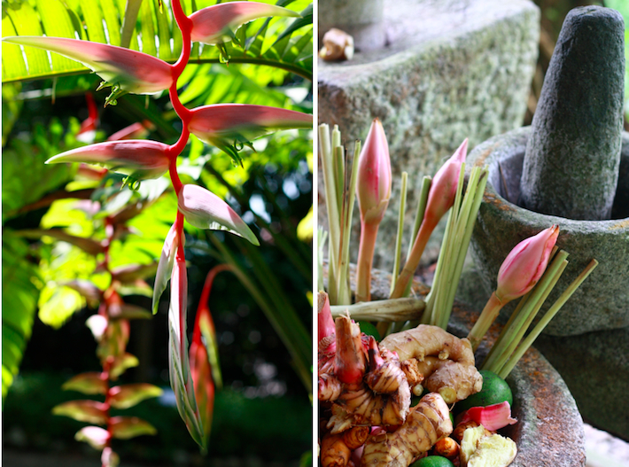 flowers and spices like torch ginger flower, galangal, ginger, lime, turmeric, lemongrass