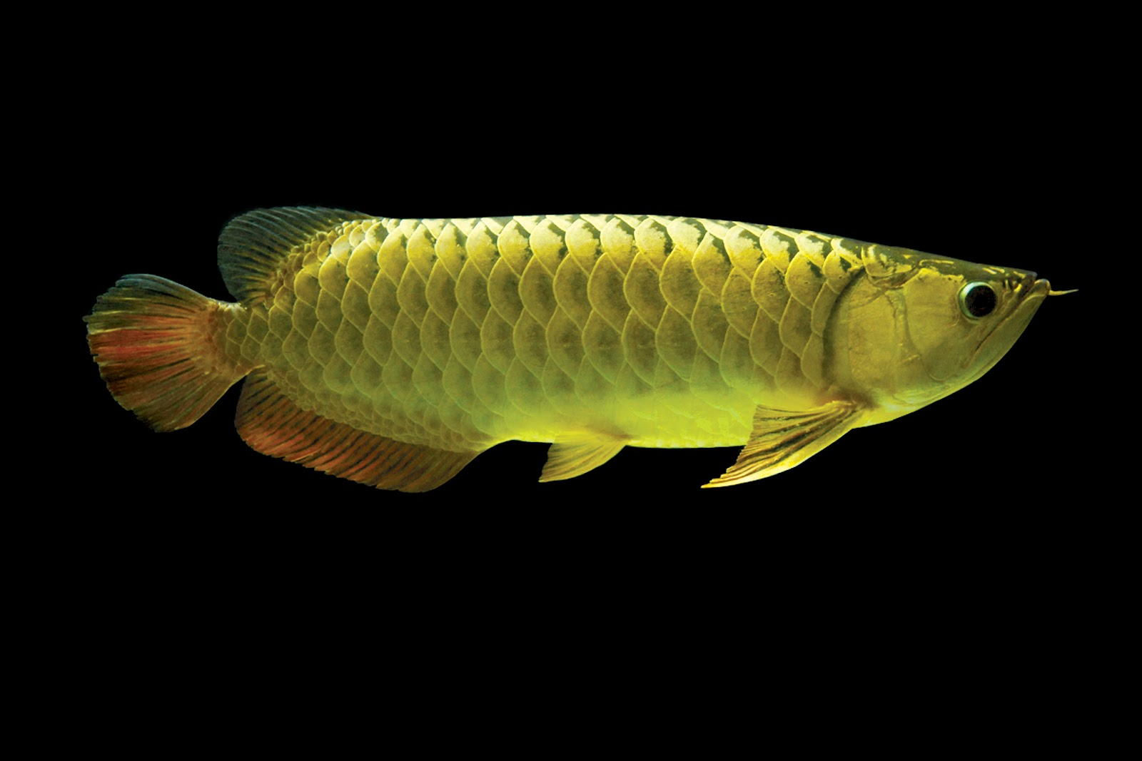 teen myspace alternative