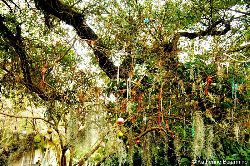 Mardi Gras Beads in the Trees of the Garden District New Orleans