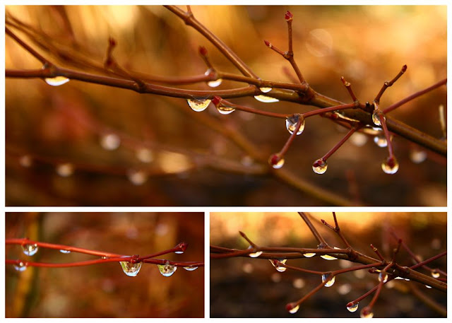 raindrops collage © Annie Japaud Photography, branches, raindrops, goden