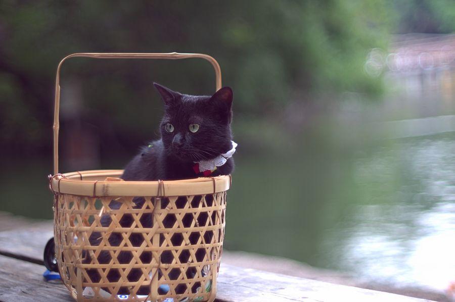 11. portable cat by takashi kitajima