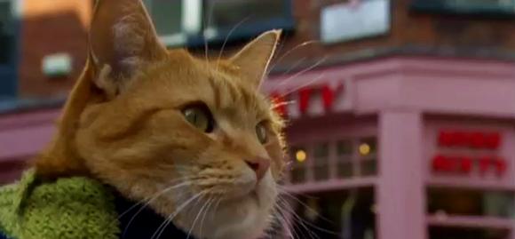 Adoção de gato transforma cantor de rua de Londres em escritor | Cachorro Ideal