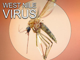 West Nile Virus Causes, Symptoms, Diagnosis, Treatment, Prevention