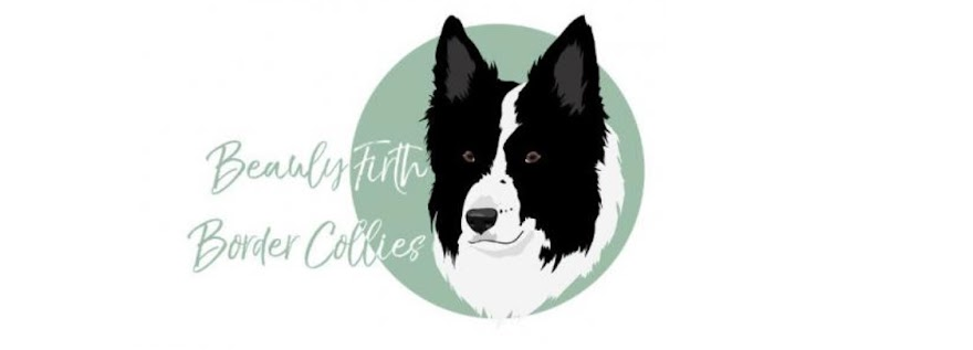 Beauly Firth Border Collie Kennel