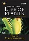 Blog Safari club, la vida privada de las plantas, capítulo 6 - La supervivencia, online