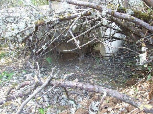 Κίνδυνος για τους κατοίκους Τσοτυλίου από την παρουσία αρκούδας