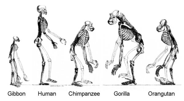 an analysis of the concept of human evolution and the biological and cultural development of humans It is the glue of human culture and the reason why humans gain pleasure from acting together both biological and cultural' (, p 181 2004 is human cultural evolution darwinian.