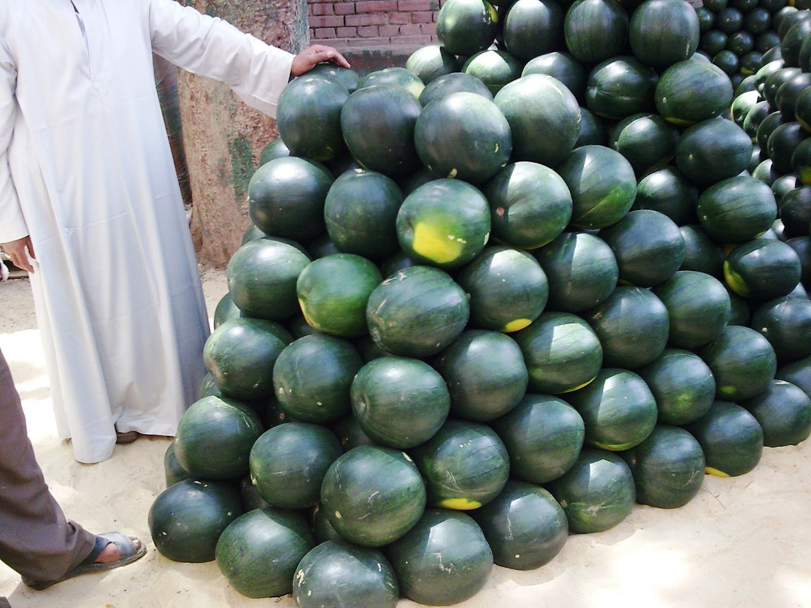 fresh_watermelon_suppliers