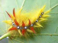 gambar hewan, wallpaper hewan, digaleri.com