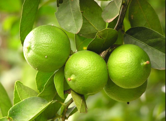 manfaat khasiat fungsi kegunaan jeruk nipis