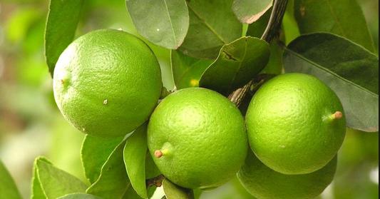 Kenali Manfaat Jeruk Nipis Untuk Kesehatan, Wajah, dan Diet Sehat