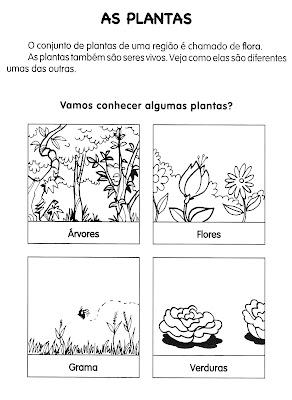Atividades de Ciências - Plantas - AS PLANTAS