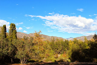 View of the Mountains from Descanso Gardens
