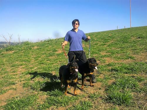 Os cães vieram ao mundo ensinar o valor do amor incondicional