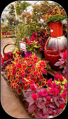 petitti's garden center plants