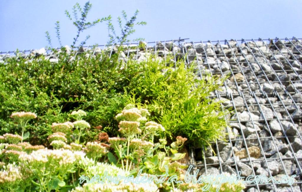 el jardín vertical más de cerca