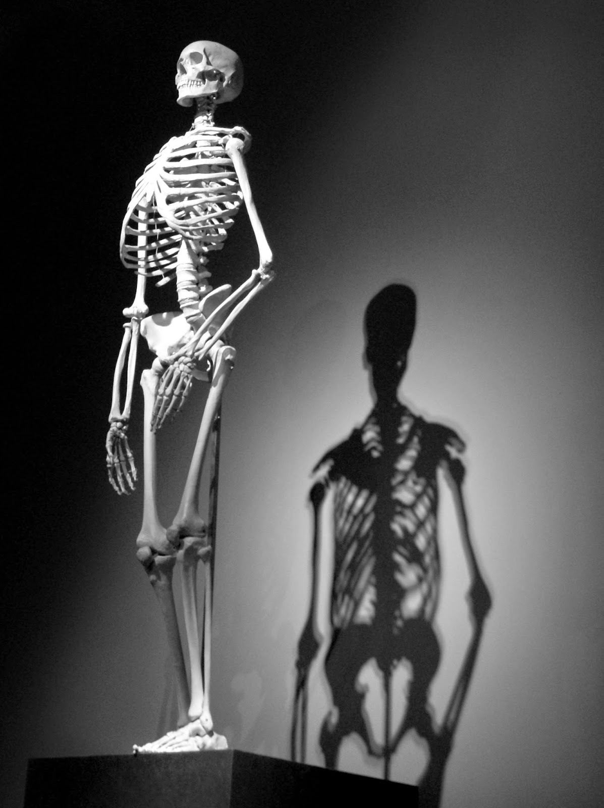 szkielet człowieka kościotrup biologia