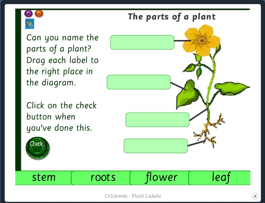 http://www.crickweb.co.uk/ks1science.html#plantlabelmx