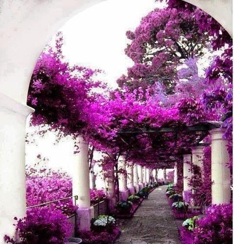Casa di Axel Munthe - Capri (Italia)