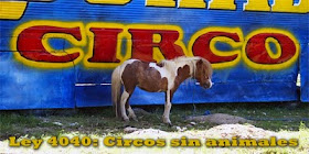 Ley 4040 Bolivia