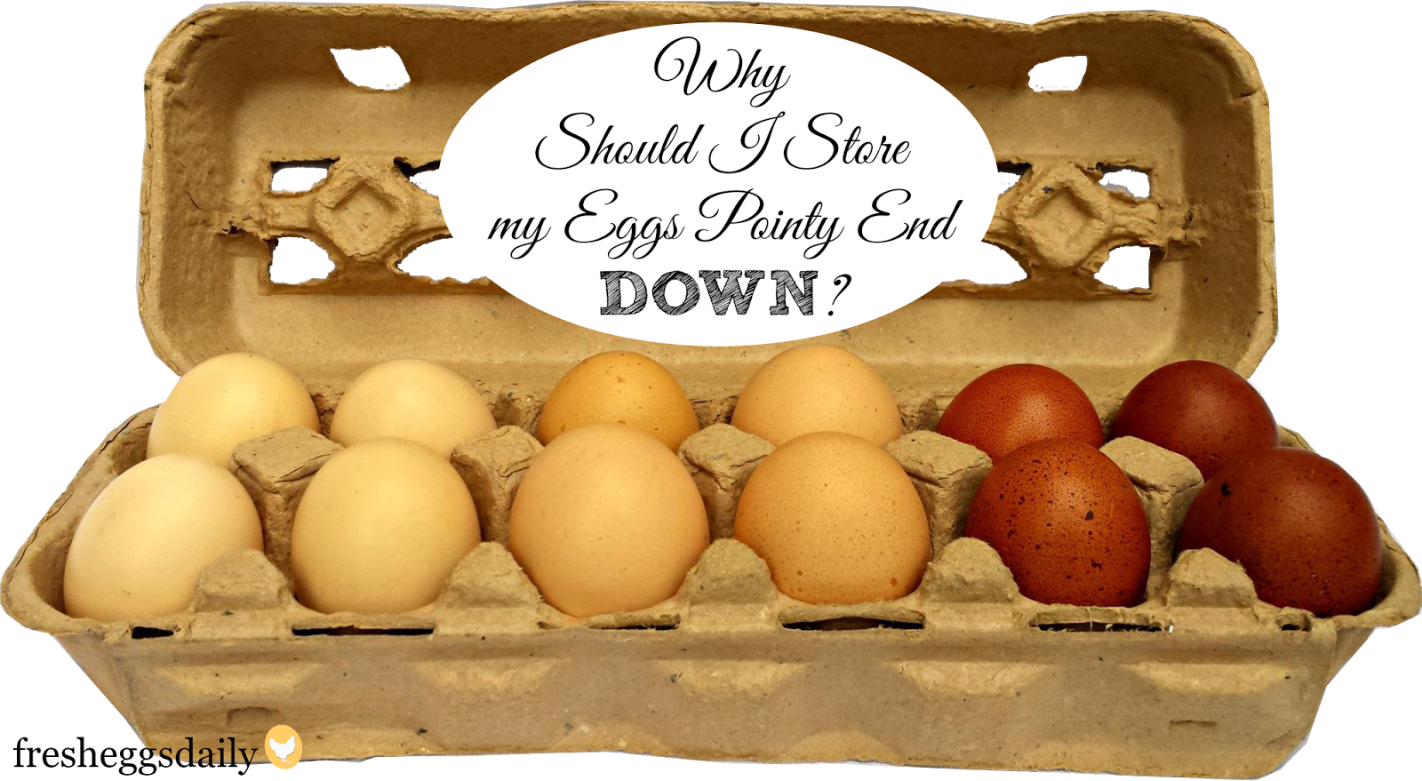 Why Should Eggs Be Stored Pointy End Down?