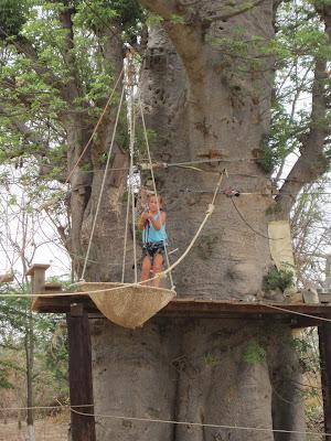 IMG_3323 ▷ La Reserva de Bandia y Accro Baobab Adventures